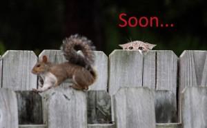 soon-squirrel